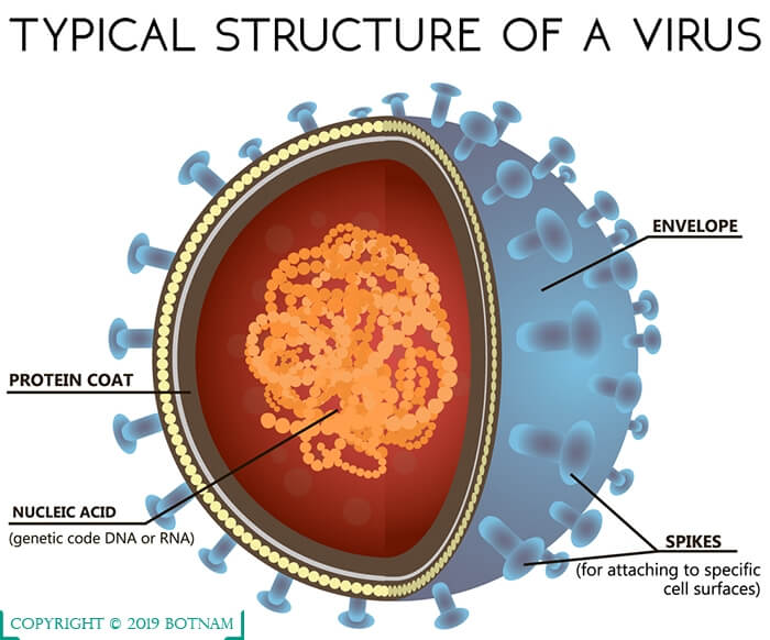 structure-of-a-virus