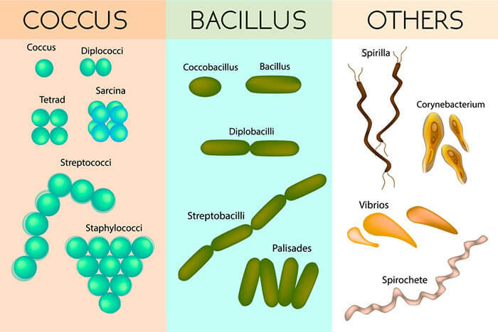 Different-Forms-of-Bacteria