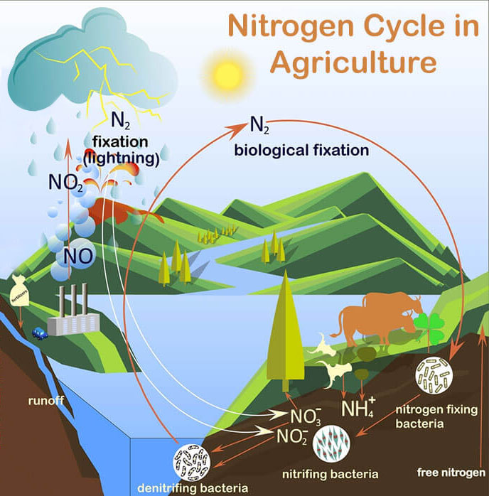 Nitrogen-Cycle-in-Agriculture