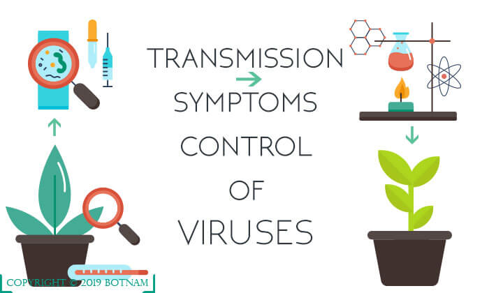Symptoms-of-Viruses-Transmission-and-Control-of-Viruses