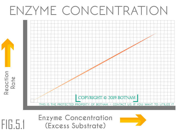 enzyme-concentrations