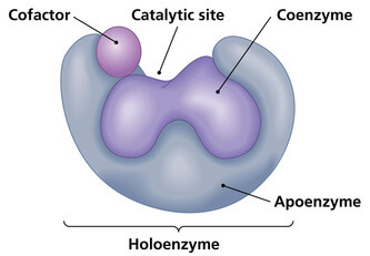 enzyme-diagram