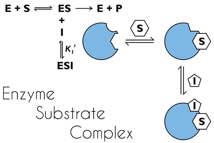 enzyme-substrate-complex