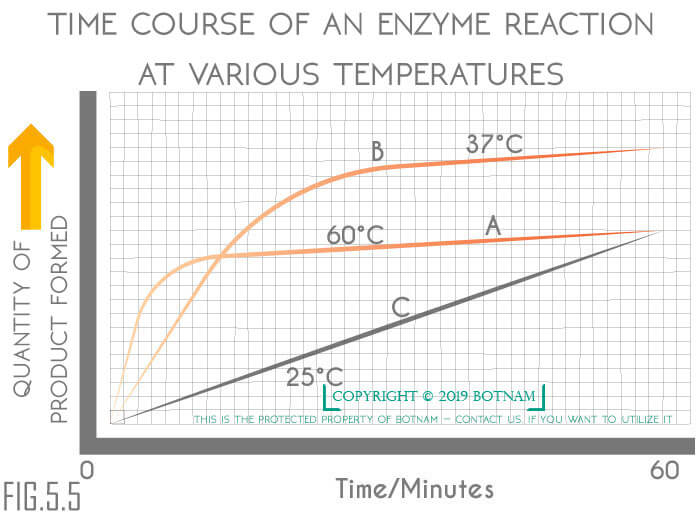 enzymes-reaction