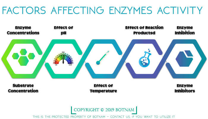 factors-affecting-enzymes-activity