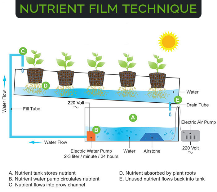nutrient-film-technique