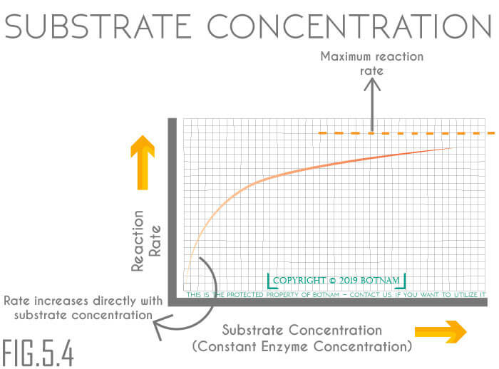 substrate-concentration