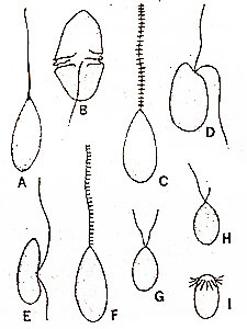 types-of-flagellation-of-motile-cells