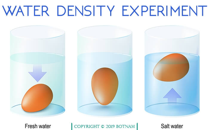 water-density-experiment