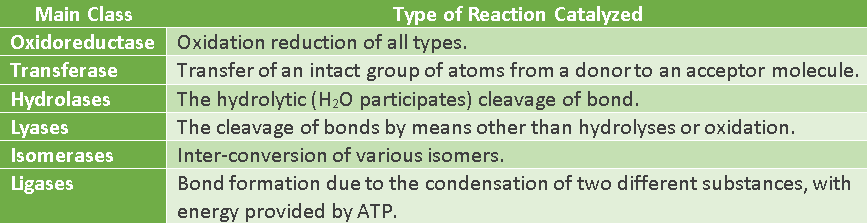 classification-of-enzymes