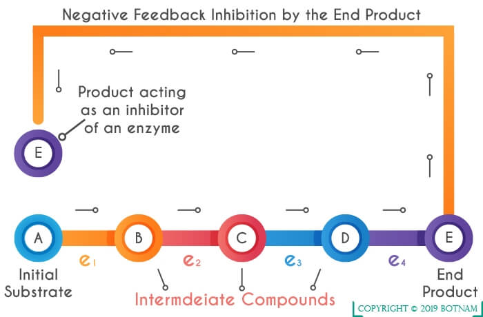 negative-feedback-inhibition