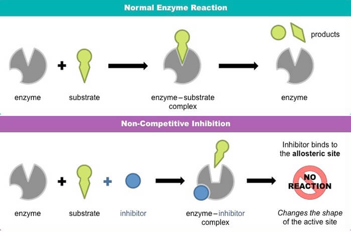 non-competitive-inhibition