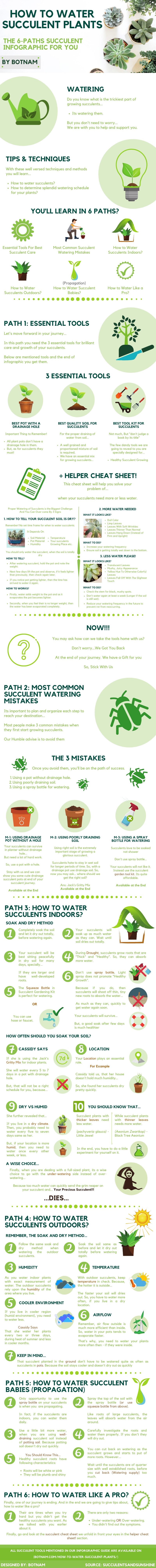 How-to-Water-Succulent-Plants-Infographic-Guide